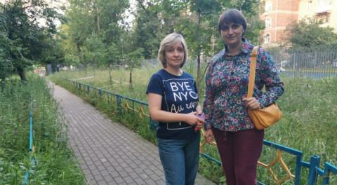 Луговые цветы во дворах Жуковского