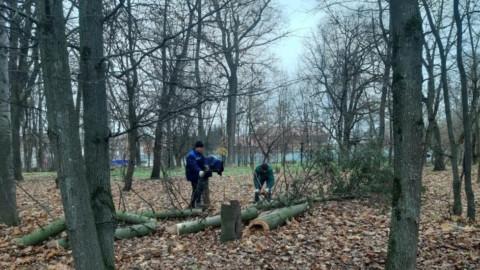 Аварийное дерево в Лобне своевременно спилили
